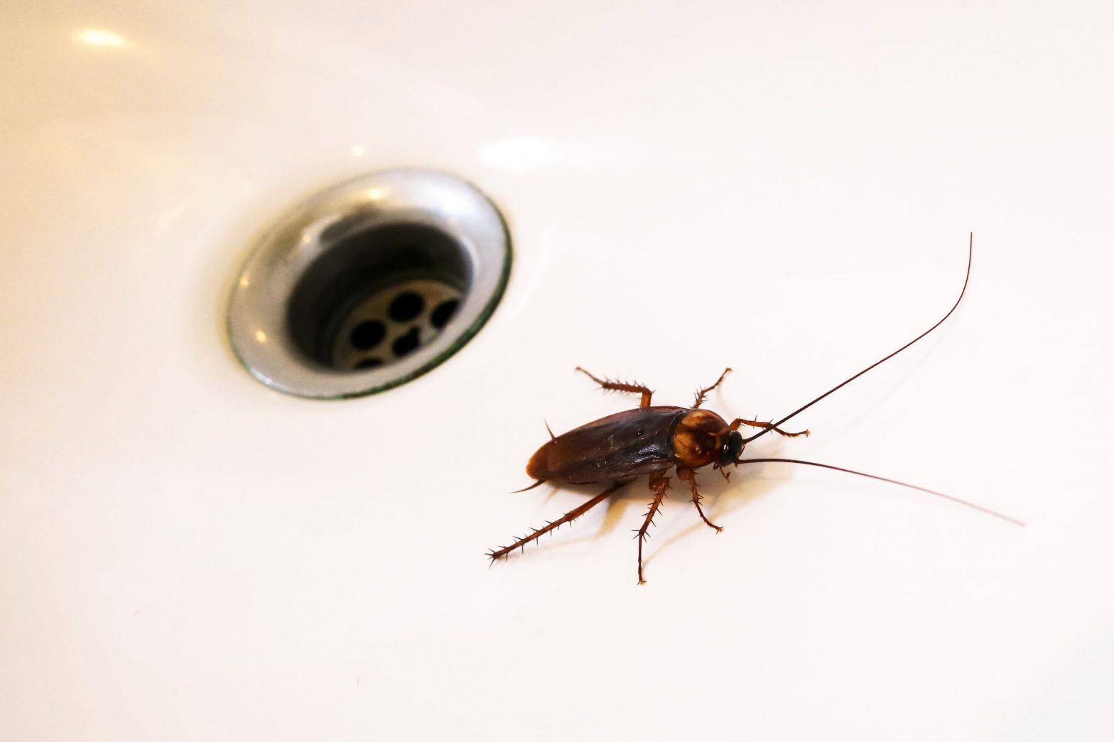 Piccoli Scarafaggi In Cucina scarafaggi in casa dove si annidano: 3 luoghi preferiti
